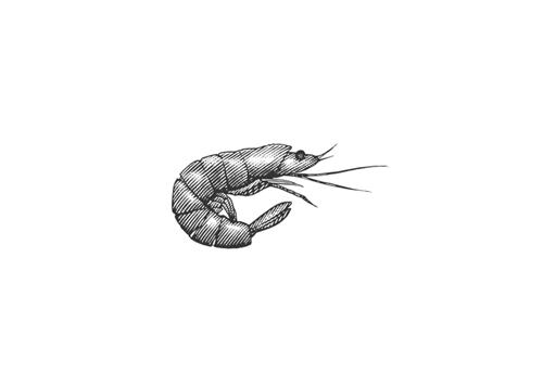 steven-noble-shrimp_bewerkt-1